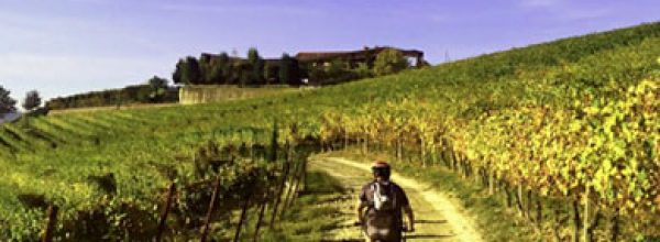 Spring tour in the Langhe wine region